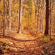 Autumn Trail Poster by Brian Jannsen
