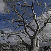 Ghost Tree Poster by Debra and Dave Vanderlaan