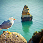 Seagull On The Rock Poster by Raimond Klavins