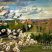 Spring Time Poster by Robert Bales