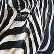 Zebra Poster by Ilse Kleyn