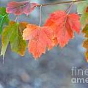 Autumn Leaves Poster by Mariusz Blach