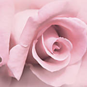 Blushing Pink Rose Flower Poster by Jennie Marie Schell