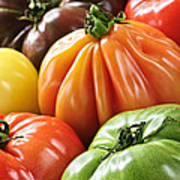 Heirloom Tomatoes Poster by Elena Elisseeva