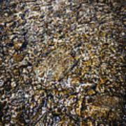 Rocks In Water Poster by Elena Elisseeva