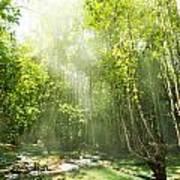 Waterfall In Rainforest Poster by Atiketta Sangasaeng