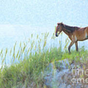 Wild Horse On The Outer Banks Poster by Diane Diederich