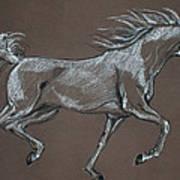 Arabian Horse  Poster by Angel  Tarantella