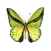 8 Goliath Birdwing Butterfly Poster by Amy Kirkpatrick