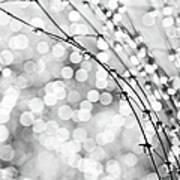 After The Rain Poster by Theresa Tahara