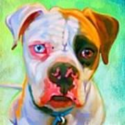 American Bulldog Art Poster by Iain McDonald