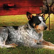Animal - Dog - Always Faithful Poster by Mike Savad