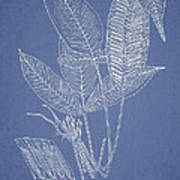 Anisogonium Lineolatum Poster by Aged Pixel
