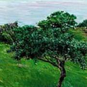 Apple Trees By The Sea Trouville Poster by Gustave Caillebotte