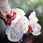 Apricot Flowers Poster by Irina Sztukowski