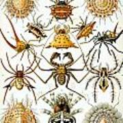 Arachnida Poster by Georgia Fowler