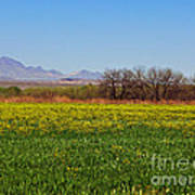 Arizona Spring Poster by Methune Hively