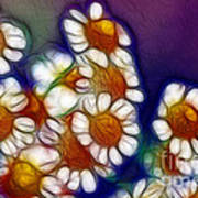 Artistic Feverfew Poster by Kaye Menner