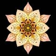 Asiatic Lily Flower Mandala Poster by David J Bookbinder