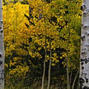 Aspen Light Poster by Dave Dilli