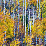 Aspen Tree Magic Cottonwood Pass Poster by James BO  Insogna