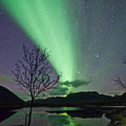 Auroras And Tree Poster by Frank Olsen