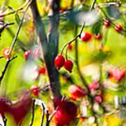 Autumn Berries  Poster by Stelios Kleanthous