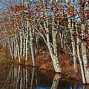 Autumn Blue Poster by Karol Livote