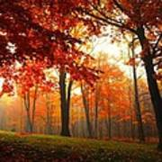 Autumn Canopy Poster by Terri Gostola