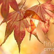 Autumn Glow Poster by Anne Gilbert