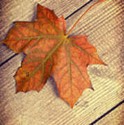 Autumn Leaf Poster by Amanda And Christopher Elwell