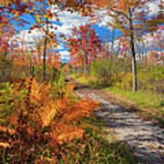 Autumn Splendor Poster by Bill Wakeley