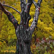 Autumn Trees3 Poster by Vladimir Kholostykh