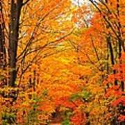 Autumn Tunnel Of Trees Poster by Terri Gostola