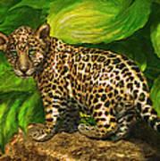 Baby Jaguar Poster by Jane Schnetlage