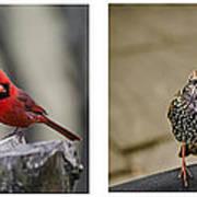 Backyard Bird Series Poster by Heather Applegate
