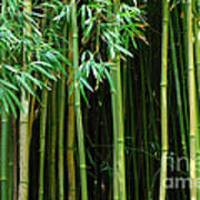 Bamboo Forest Maui Poster by Bob Christopher