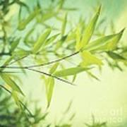 Bamboo In The Sun Poster by Priska Wettstein