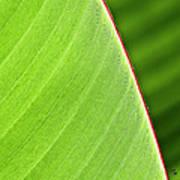 Banana Leaf Poster by Heiko Koehrer-Wagner