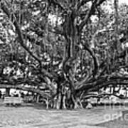 Banyan Tree Poster by Scott Pellegrin