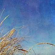 Beach Grass In The Wind Poster by Michelle Calkins