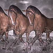 Beach Horse Trio Night March Poster by Betsy C Knapp