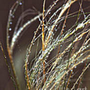 Beads Of Water On Sea Grass Poster by Artist and Photographer Laura Wrede