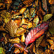 Beautiful Fall Color Poster by Meirion Matthias
