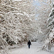 Beautiful Forest In Winter With Snow Covered Trees Poster by Matthias Hauser