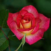 Beautiful Rose Poster by Sandy Keeton