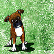 Befuddled Brindle Boxer Poster by Kim Niles