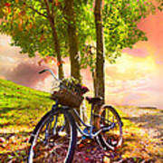 Bicycle Under The Tree Poster by Debra and Dave Vanderlaan