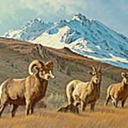 Bighorn Below Electric Peak Poster by Paul Krapf