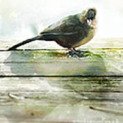 Bird On The Deck Poster by Artist and Photographer Laura Wrede